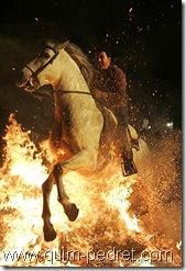 caballoconfuego